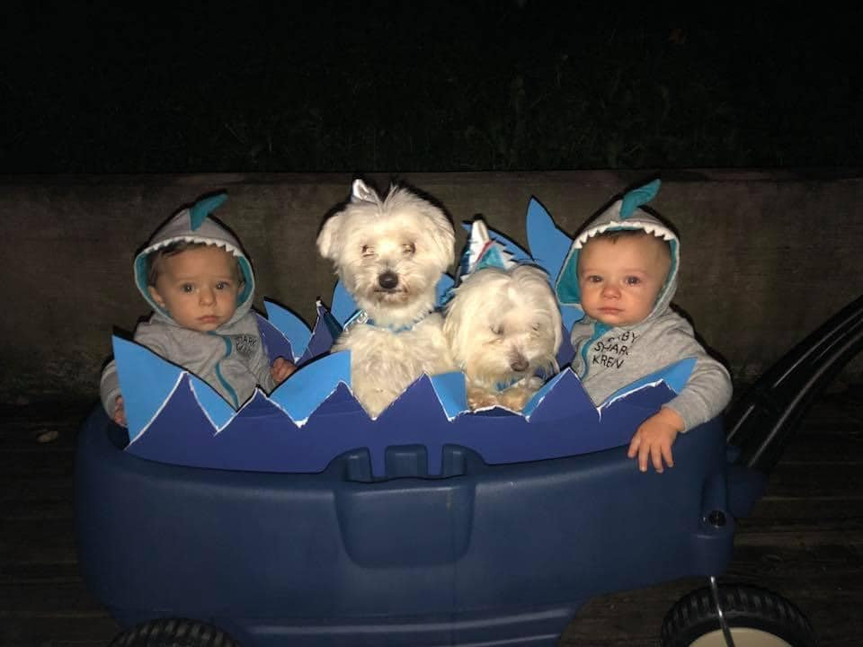 twin boys and dogs dressed as baby shark twin boys halloween costumes