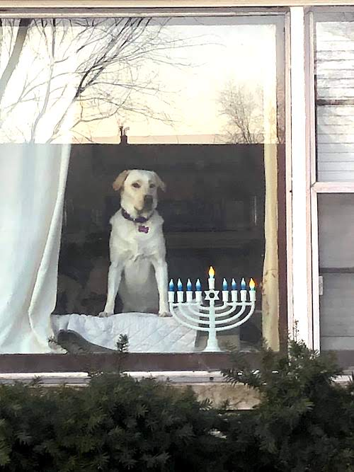holiday safety tips dog and an electric menorah in the window