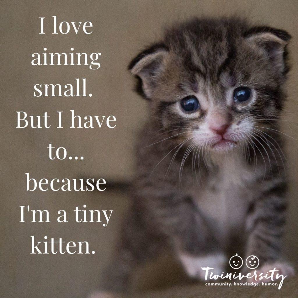 tiny kitten needs you to aim small