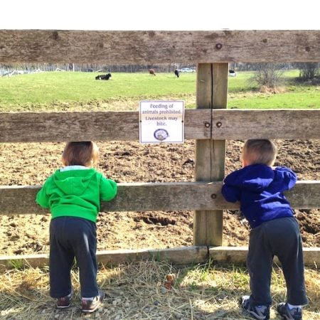 twin boys leaning over a fence at a farm