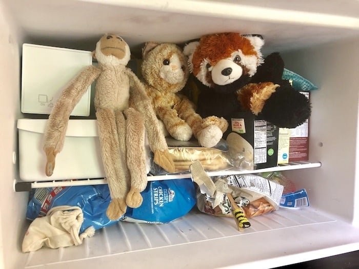 beat the heat stuffed animals freezer