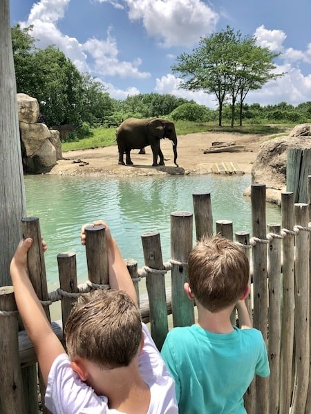 indianapolis zoo elephants