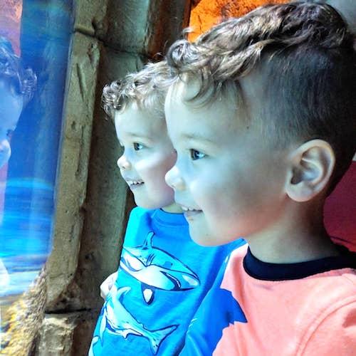 boys looking at fish at aquarium balance career and kids