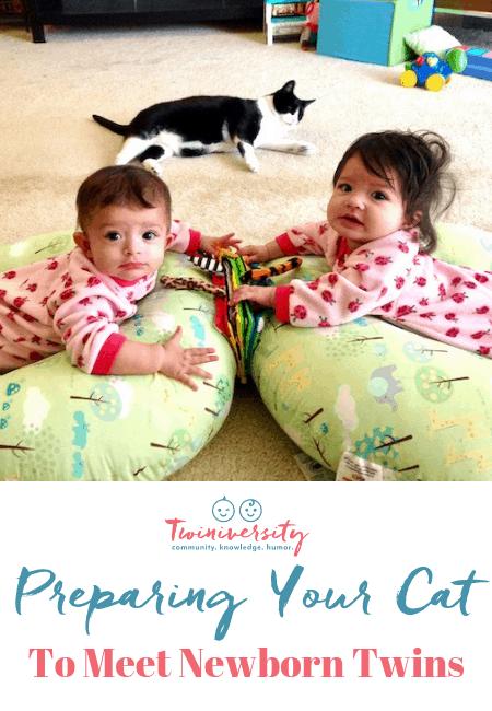 preparing your cat