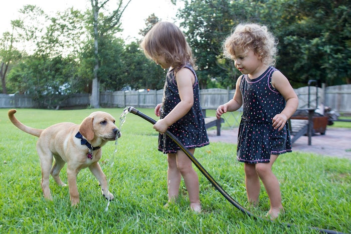 twin little girls and puppy in the yard spring clean up