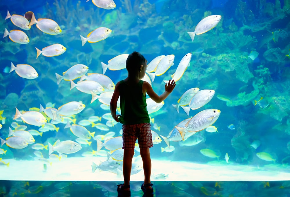 boy looking at fish tank aquarium kids toys