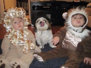 """Lion and Monkey with their puppy as the """"animal trainer"""""""